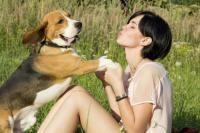langage chien