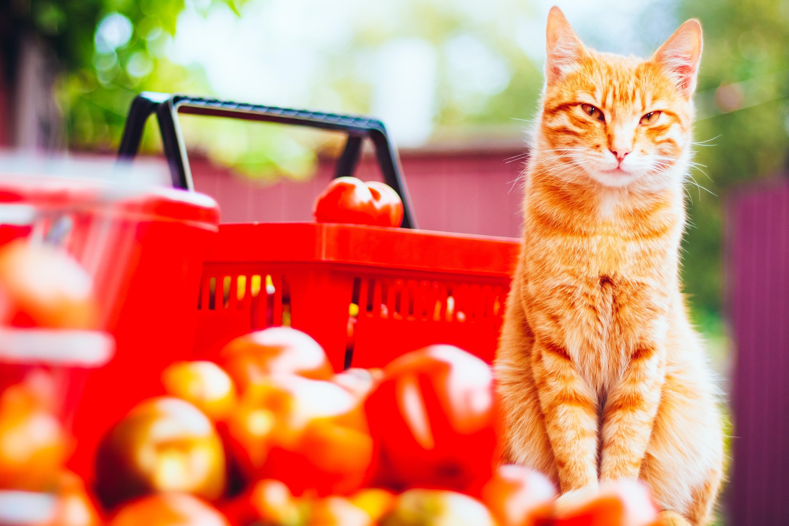 Les besoins en vitamines, minéraux et oligoéléments du chat