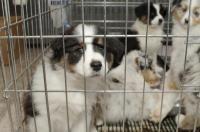 litige achat chien