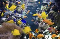 maladies des poissons