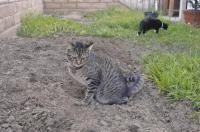 marquage urinaire du chat