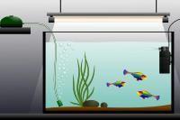 matériel d'un aquarium