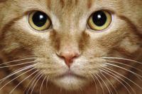 moustaches du chat