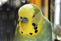 oiseau malade