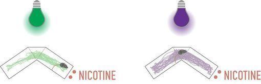 optogénétique nicotine
