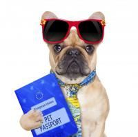 papiers du chien