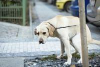 parasites digestifs chien