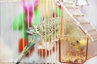 perchoir et mangeoire pour oiseaux
