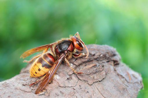piqure insecte