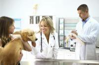 premiere visite chien vétérinaire