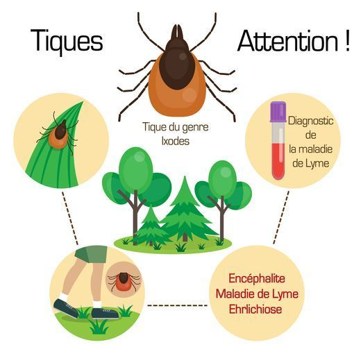 prevention maladie lyme