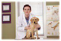 Rendez-vous vétérinaires
