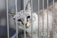 refuge pour chat