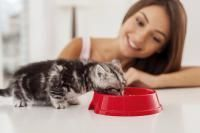 régime alimentaire du chat