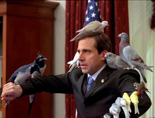 Rêve de pigeon
