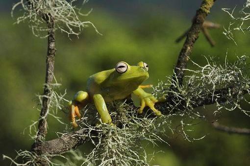 Rêves de grenouille