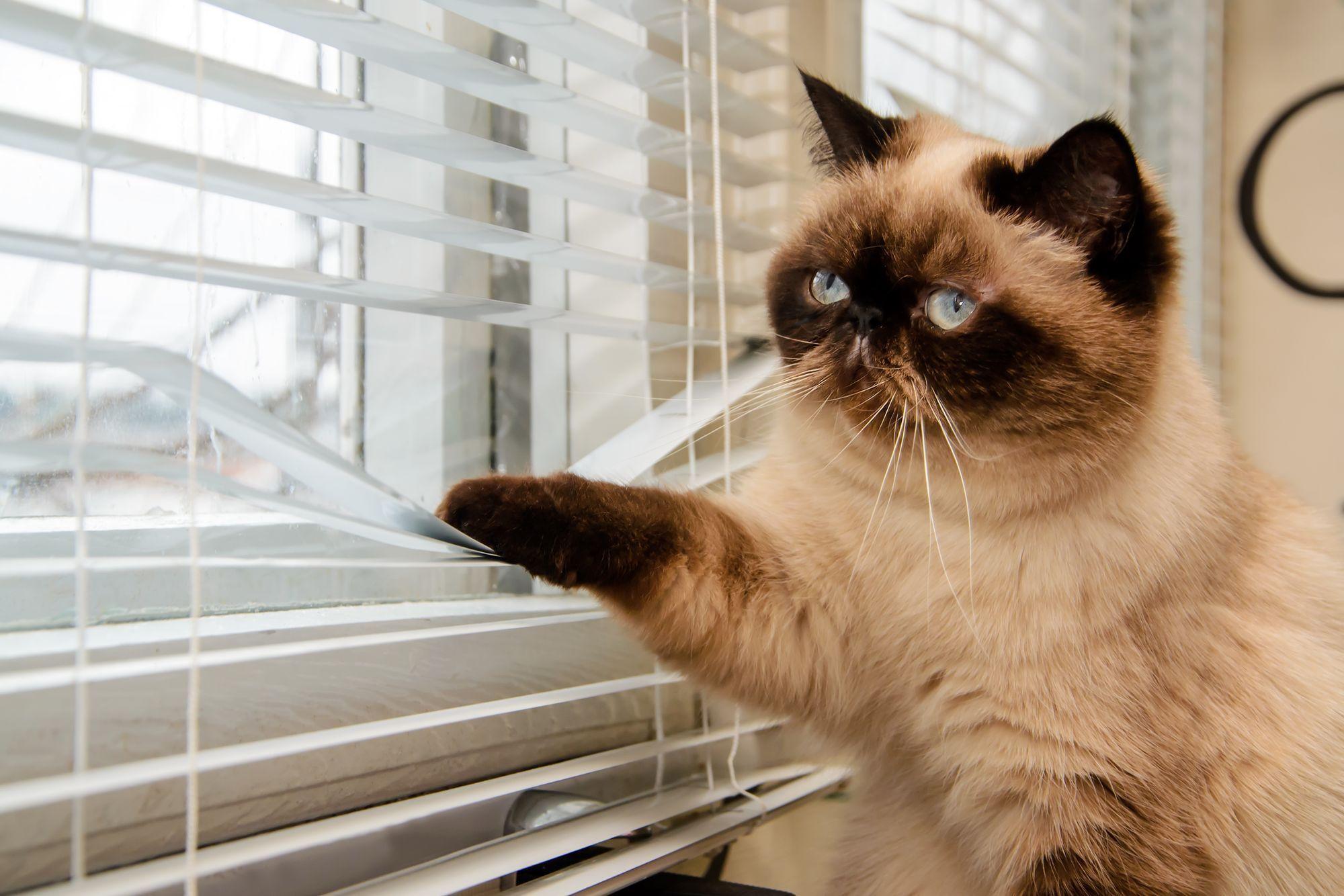Séparation du couple : et votre chat dans tout cela ?