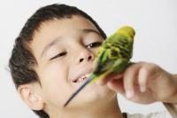siffler oiseau