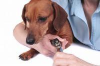soin griffes chien