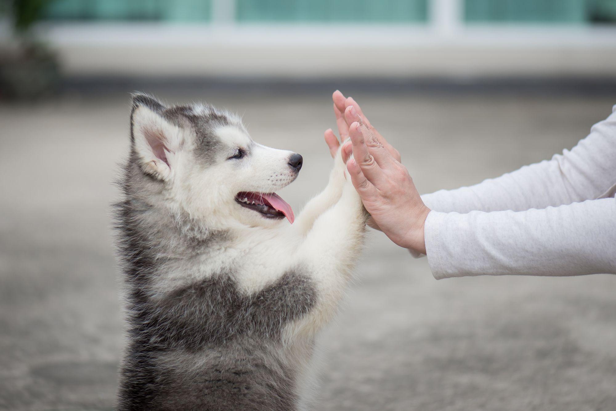soins chien