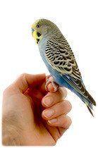 Soin oiseaux