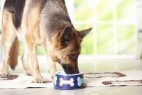 systeme digestif du chien