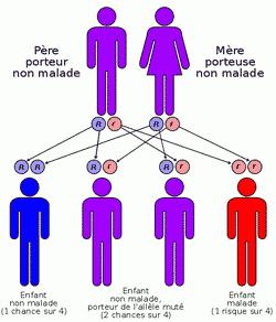 http://cdn.news.doctissimo.fr/var/newsdoctissimo/storage/images/media/images/drepanocytose2-gif/289296-1-fre-FR/drepanocytose2.gif.gif