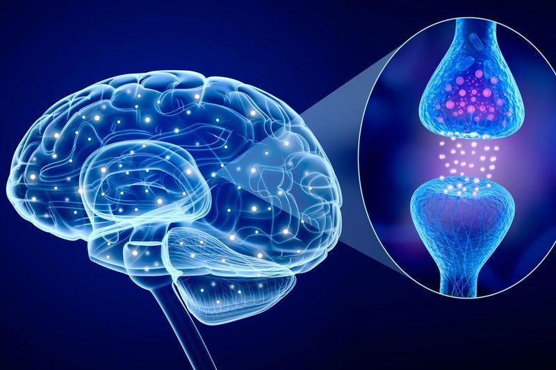 transmission neuronale