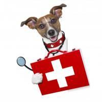 trousse pharmacie chien