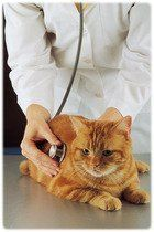 Urgence vétérinaire