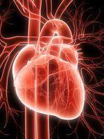 vaisseaux-coeur