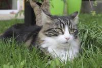 deworm a cat