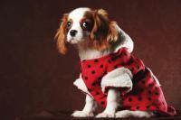 vetements-pour-chien_medium