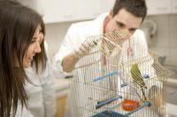 Vomissements et régurgitations chez l'oiseau