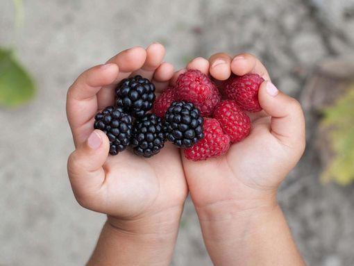 fruit-alimentation-bebe-wd-510