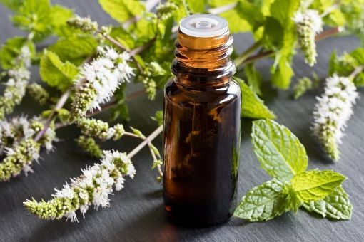 Huiles essentielles antalgiques et anti inflammatoires