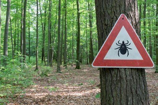 Maladie de Lyme - Symptômes et traitements - Doctissimo