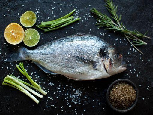 poisson-alimentation-bebe-wd-510