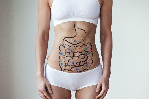 Probiotiques intestin