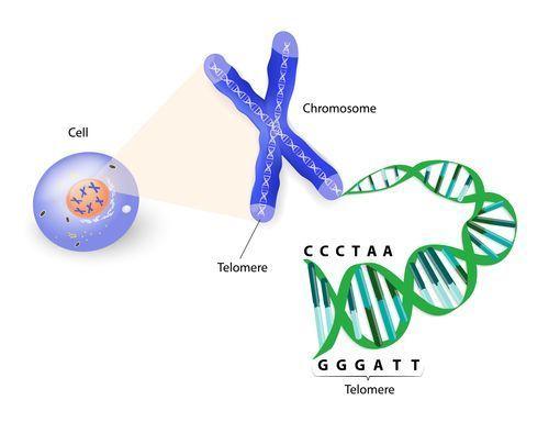 schéma cellule