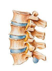 schéma colonne vertébrale