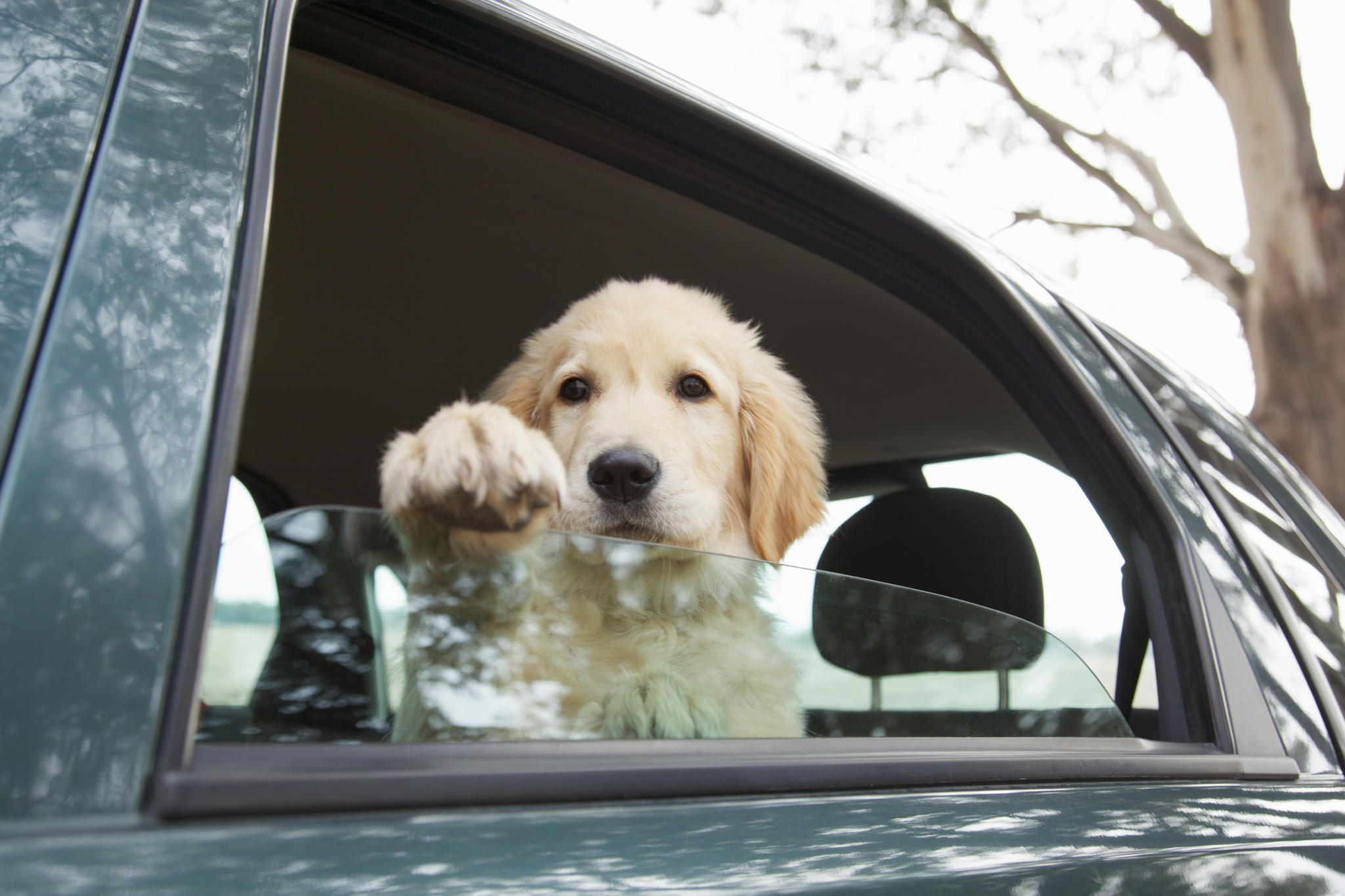 chien mal des transports