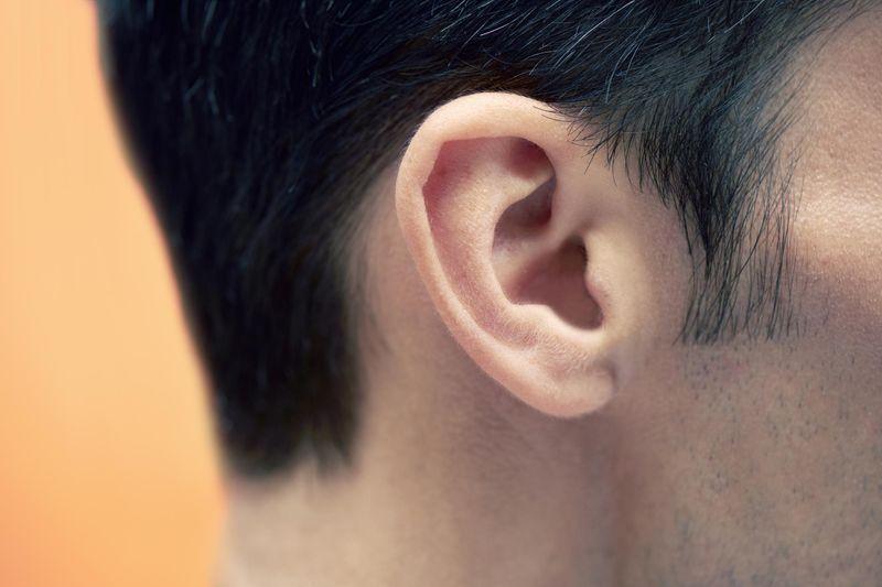 Fonctionnement de l'oreille