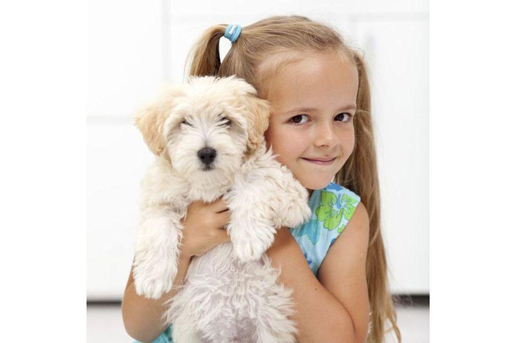 Maladies transmises par les chiens