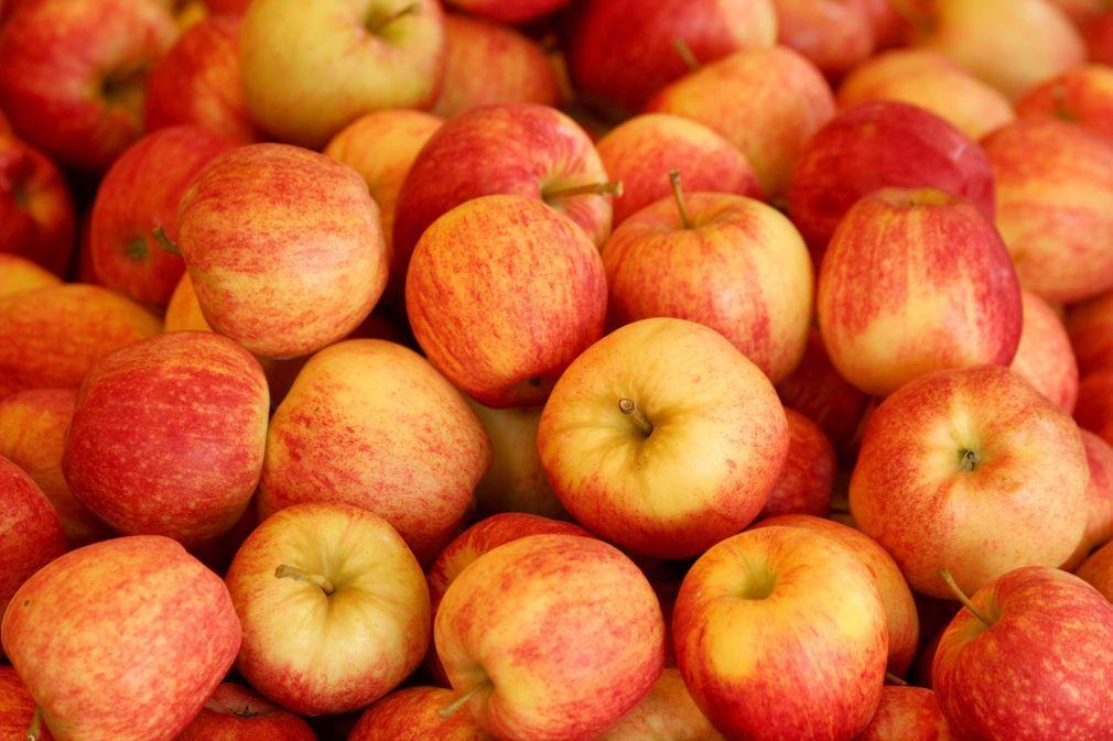Aux Etats-Unis, une nouvelle variété de pommes lancée en fanfare