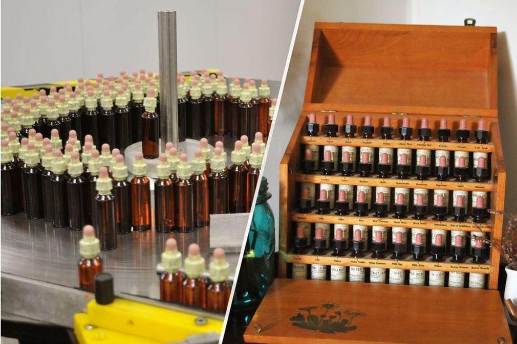 Comment sont fabriquées les Fleurs de Bach ?