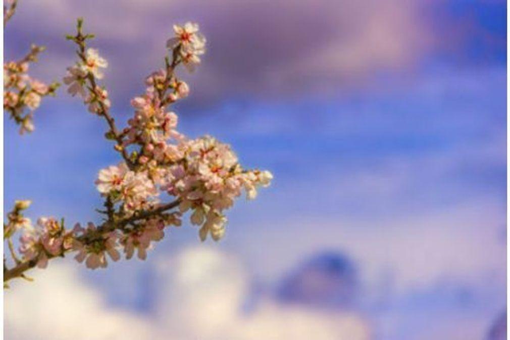 Conseils utiles pour combattre les allergies printanières