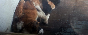chat chien errant