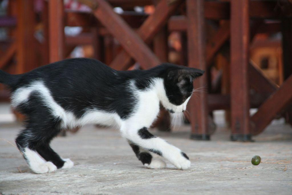 noir chatte chat bar noir mec mange la chatte