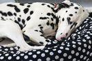 Cage, corbeille, panier, niche… Quel couchage pour mon chien ?